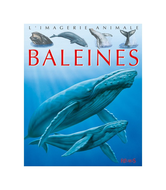 L'imagerie animale : baleines